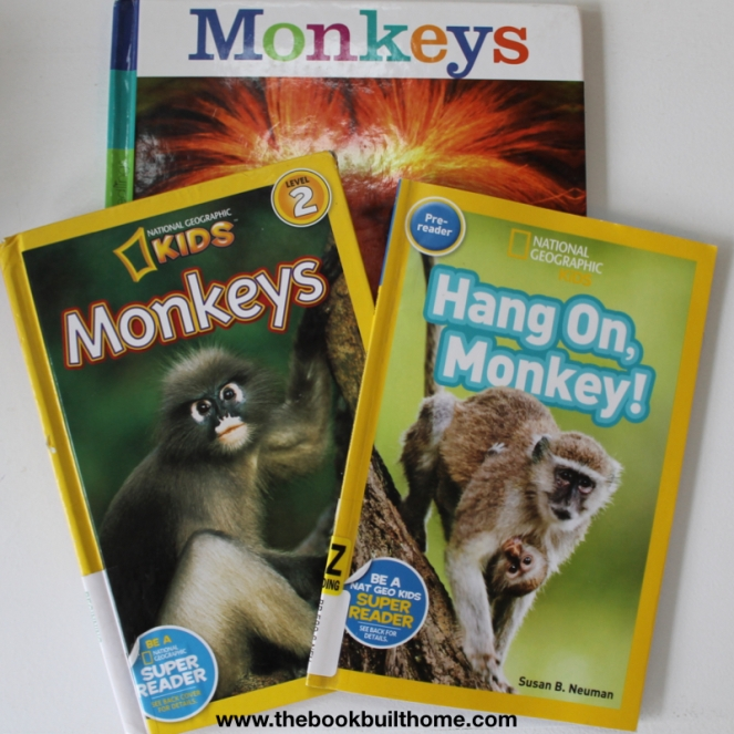 M is for Monkey Images.004